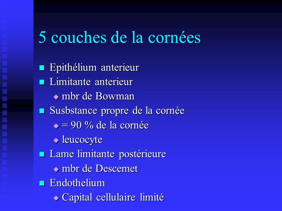 5 couches de la cornées Epithélium anterieur Limitante anterieur