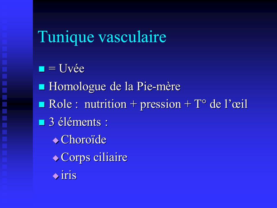 Tunique vasculaire = Uvée Homologue de la Pie-mère