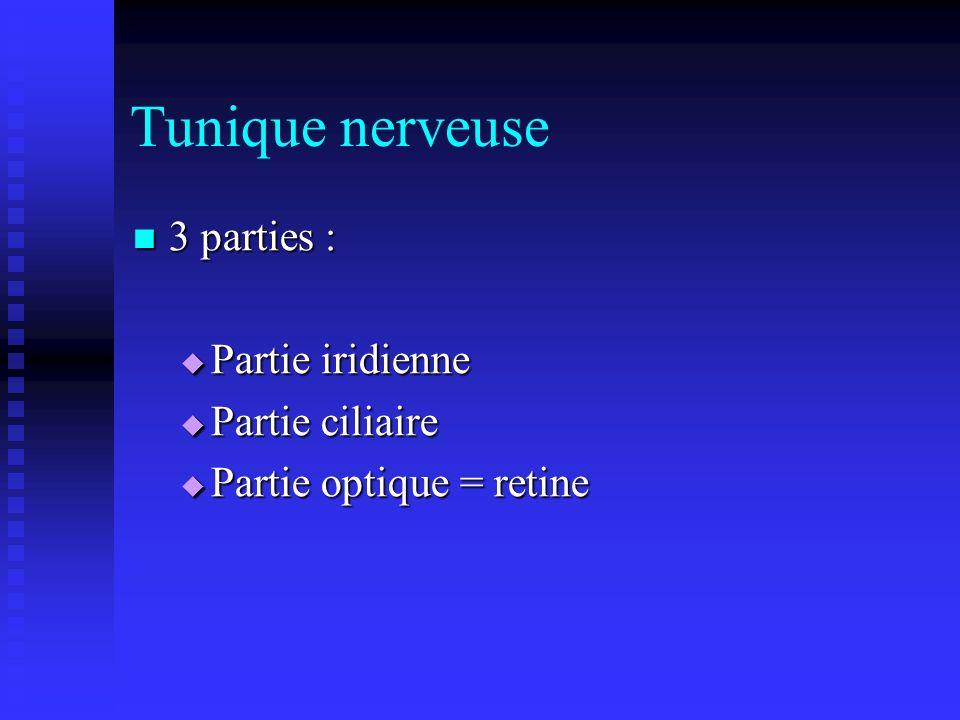Tunique nerveuse 3 parties : Partie iridienne Partie ciliaire