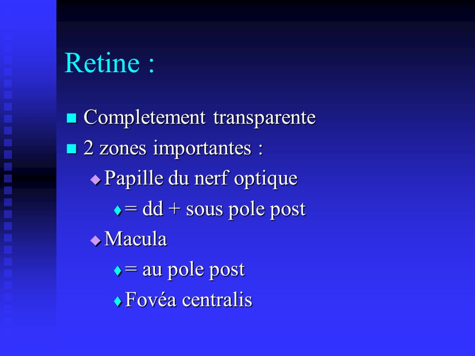 Retine : Completement transparente 2 zones importantes :