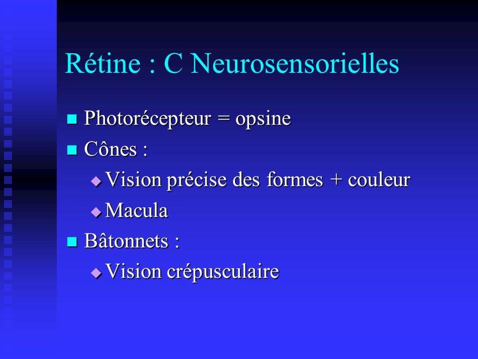 Rétine : C Neurosensorielles