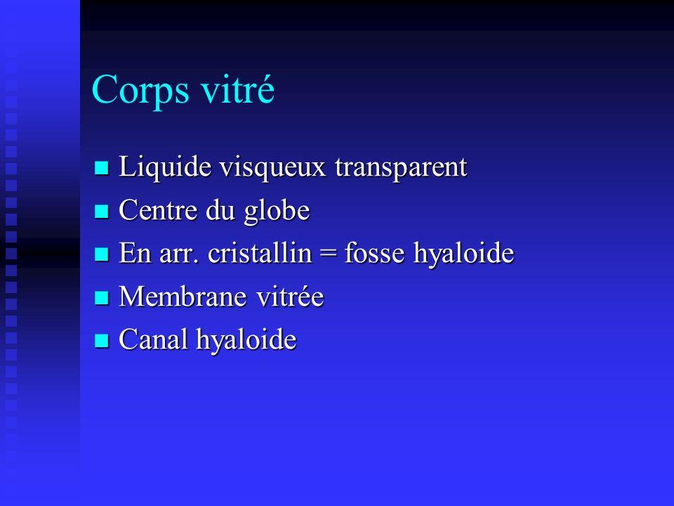Corps vitré Liquide visqueux transparent Centre du globe