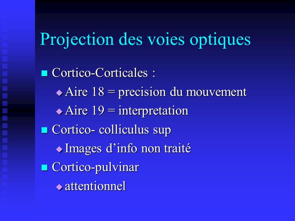 Projection des voies optiques