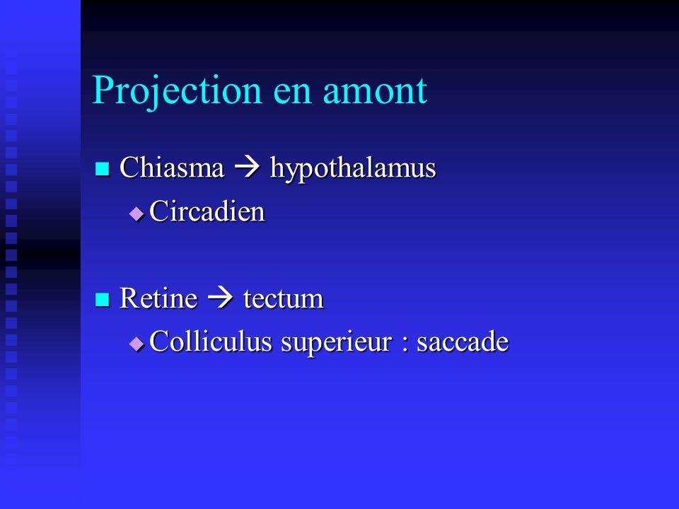 Projection en amont Chiasma  hypothalamus Circadien Retine  tectum