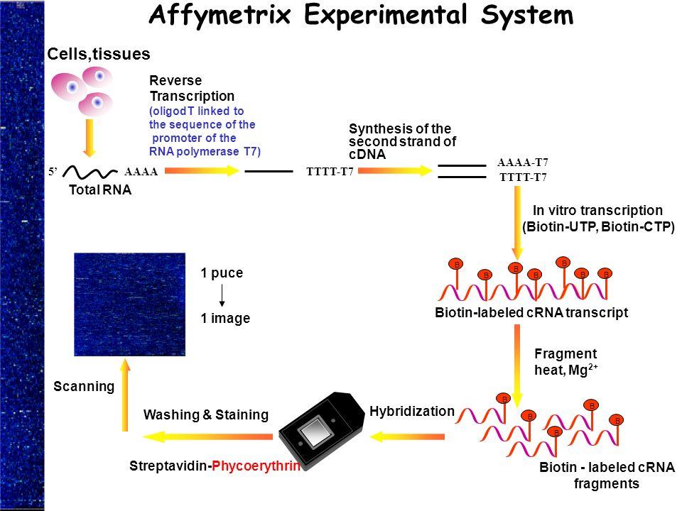 Affymetrix Experimental System
