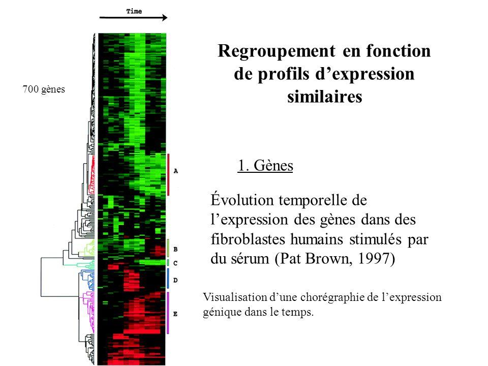 Regroupement en fonction de profils d'expression similaires