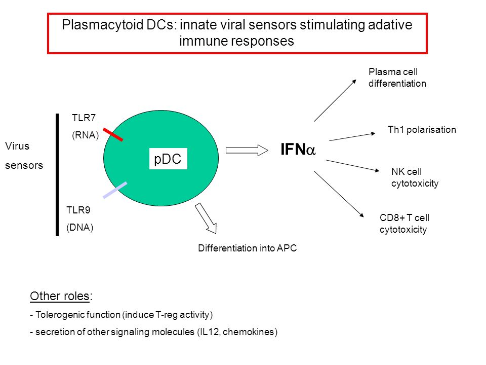 Plasmacytoid DCs: innate viral sensors stimulating adative immune responses