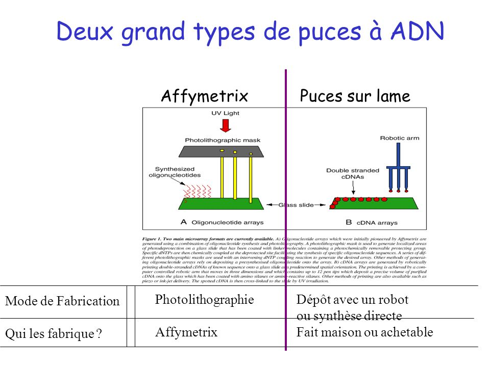 Deux grand types de puces à ADN