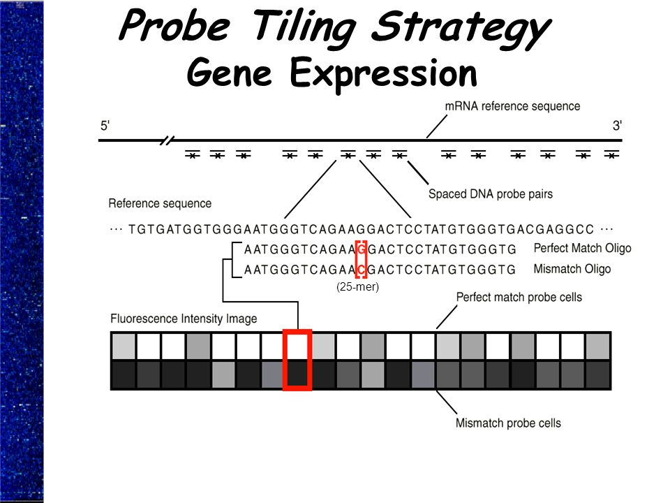 Probe Tiling Strategy Gene Expression