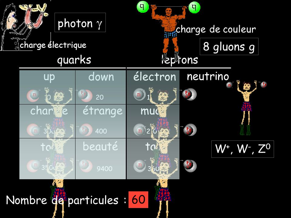 photon g 8 gluons g quarks leptons up down électron neutrino charme