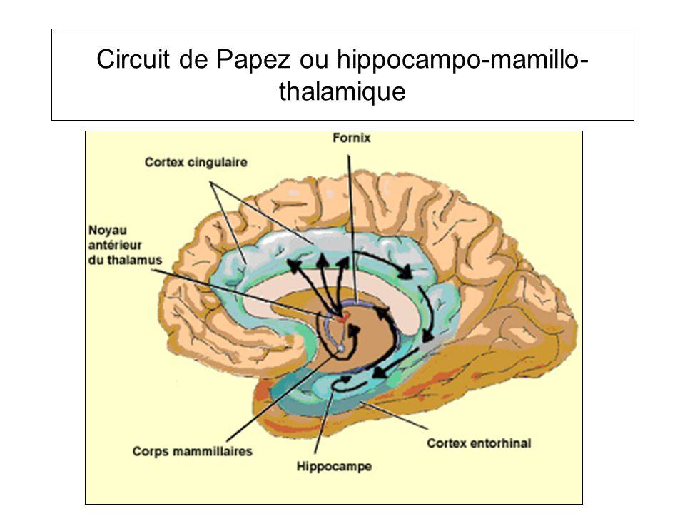 Circuit de Papez ou hippocampo-mamillo-thalamique