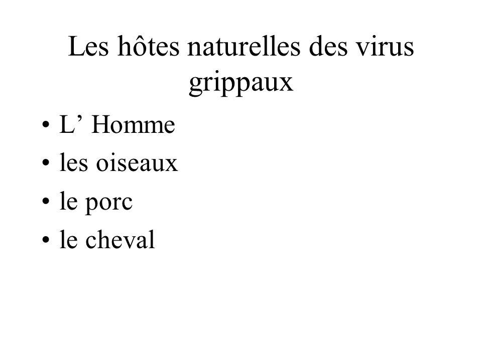 Les hôtes naturelles des virus grippaux