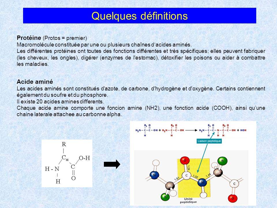 Quelques définitions Protéine (Protos = premier) Acide aminé