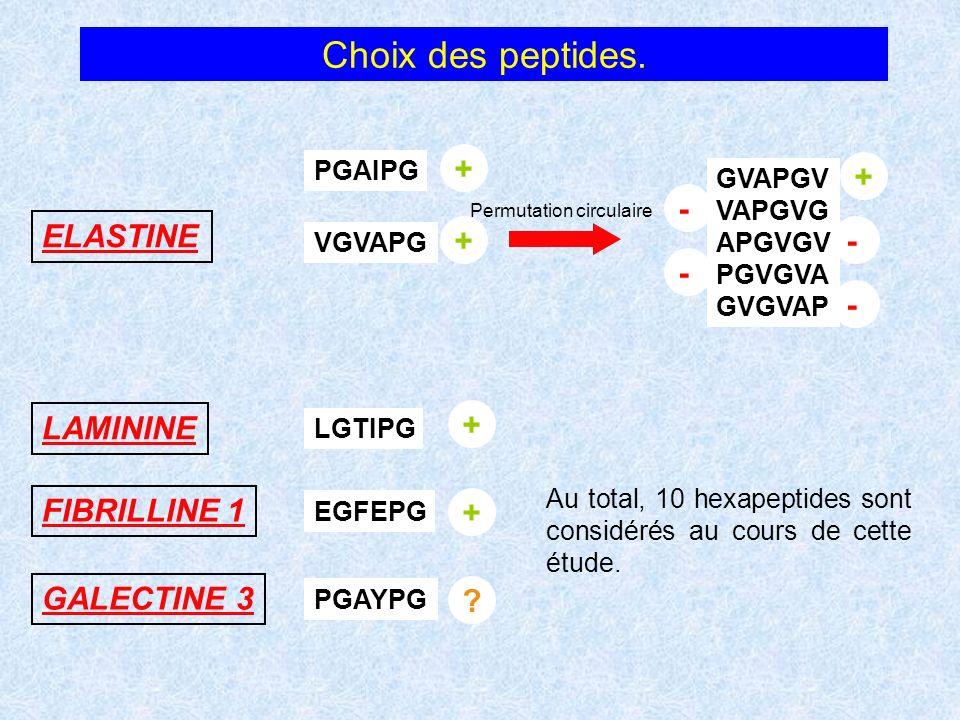 Choix des peptides. + + - ELASTINE + - - - LAMININE + FIBRILLINE 1 +