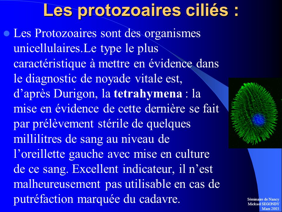 Les protozoaires ciliés :
