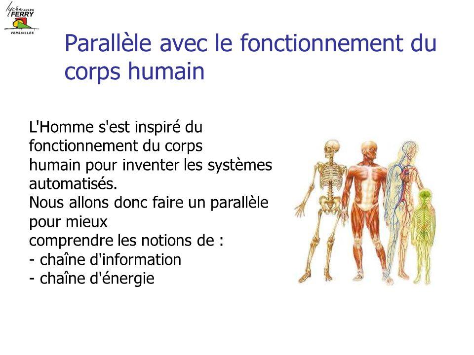 Parallèle avec le fonctionnement du corps humain