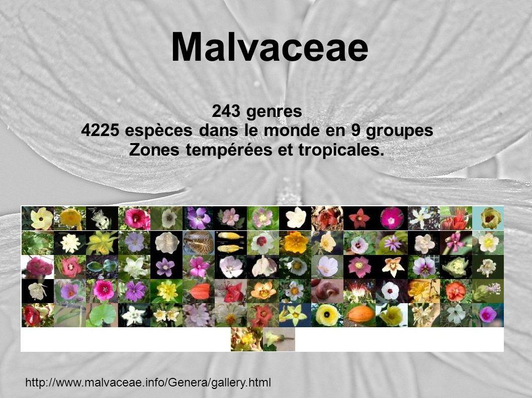 4225 espèces dans le monde en 9 groupes Zones tempérées et tropicales.