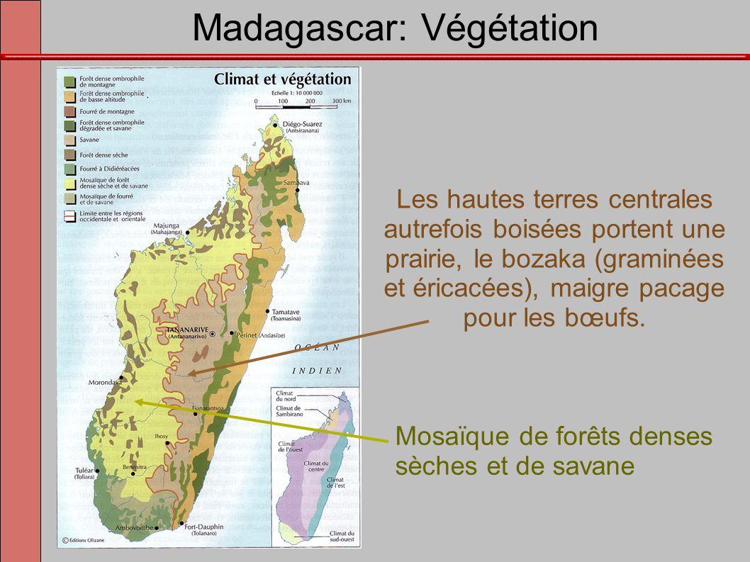 Madagascar: Végétation
