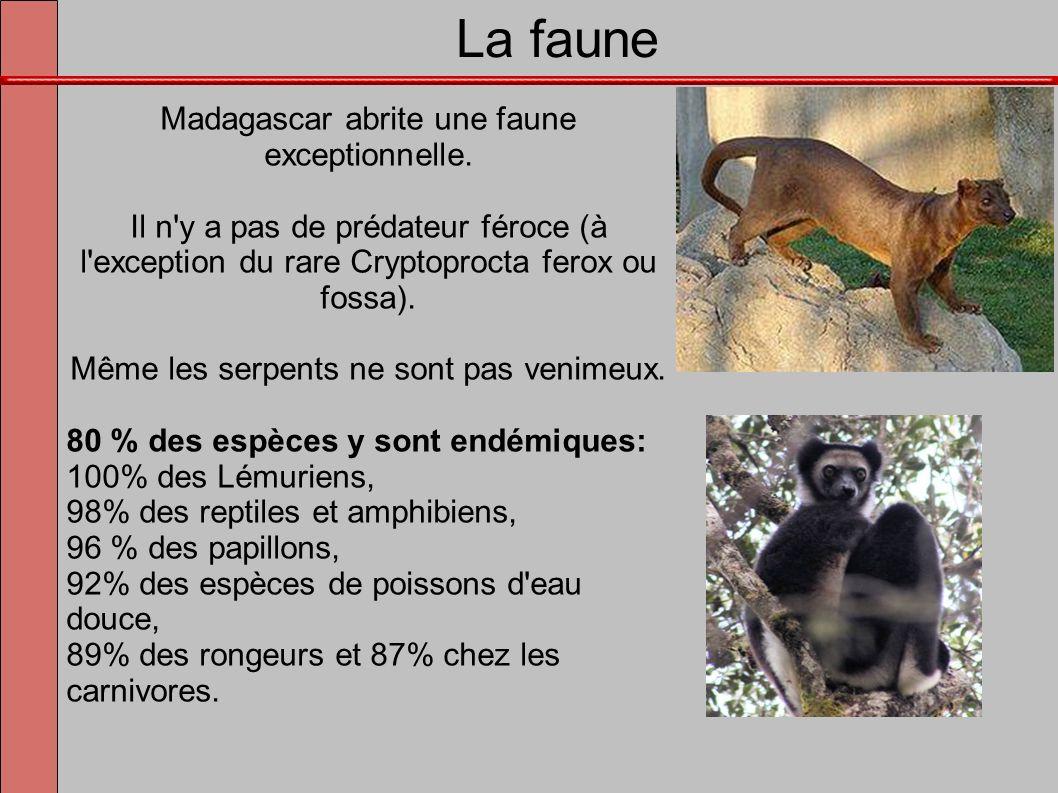 La faune Madagascar abrite une faune exceptionnelle.