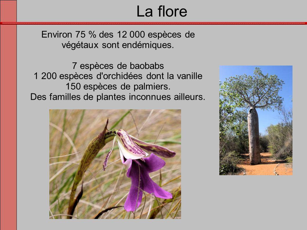 La flore Environ 75 % des 12 000 espèces de végétaux sont endémiques.