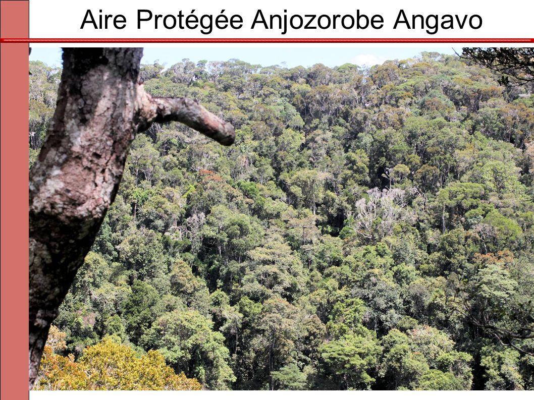 Aire Protégée Anjozorobe Angavo