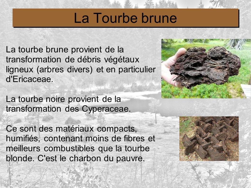 La Tourbe brune La tourbe brune provient de la transformation de débris végétaux ligneux (arbres divers) et en particulier d Ericaceae.