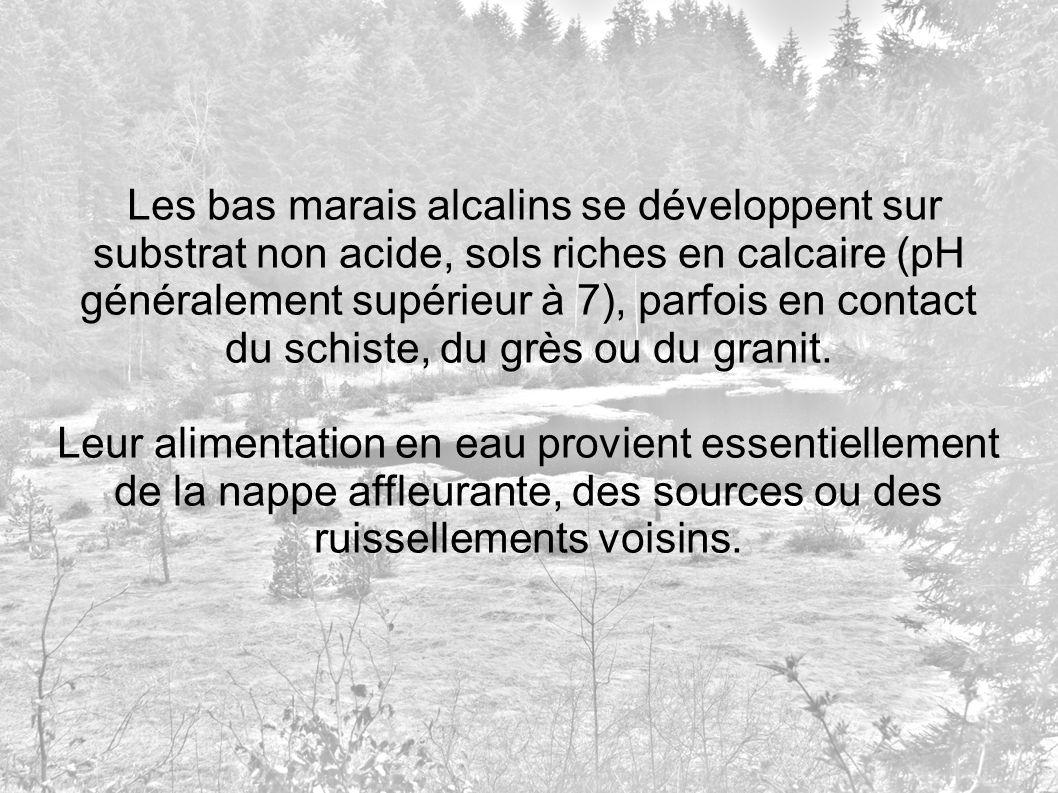 Les bas marais alcalins se développent sur substrat non acide, sols riches en calcaire (pH généralement supérieur à 7), parfois en contact du schiste, du grès ou du granit.