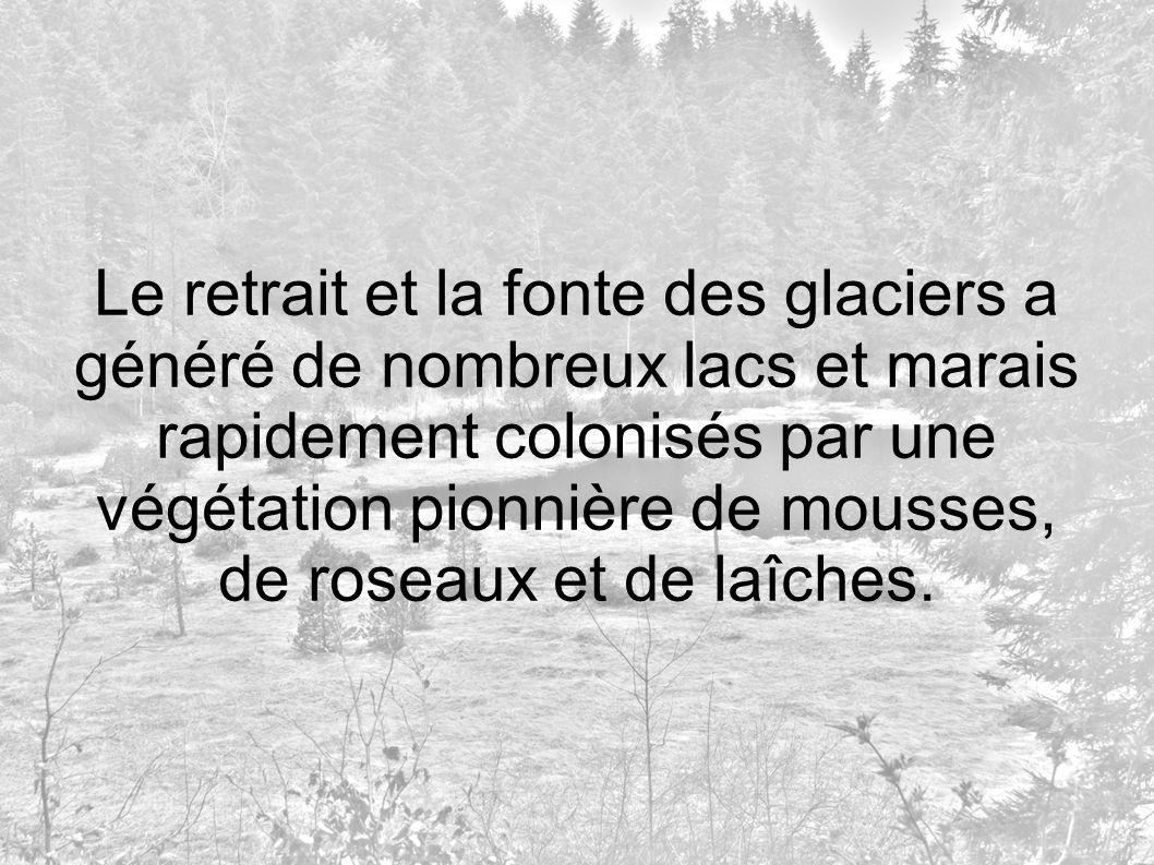 Le retrait et la fonte des glaciers a généré de nombreux lacs et marais rapidement colonisés par une végétation pionnière de mousses, de roseaux et de laîches.