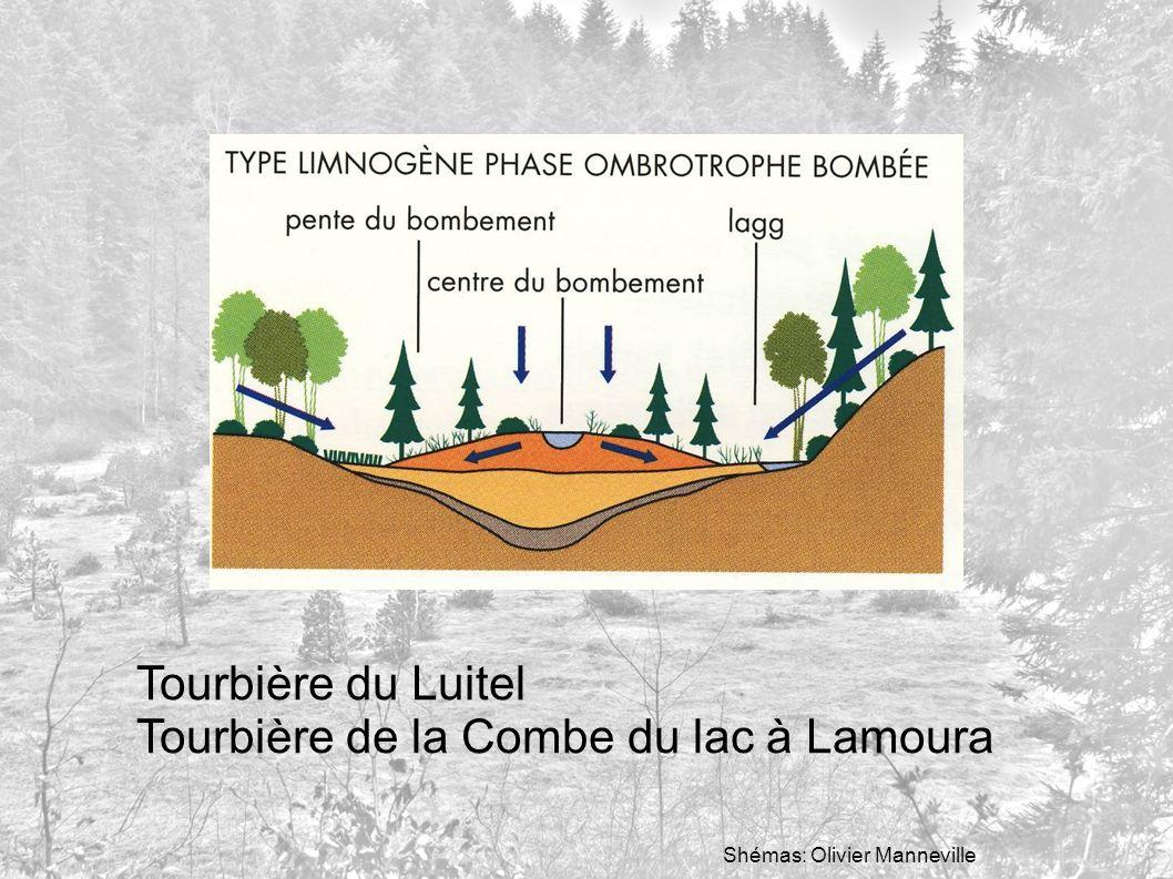 Tourbière de la Combe du lac à Lamoura