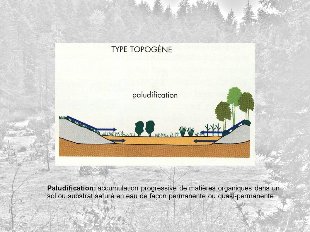 Paludification: accumulation progressive de matières organiques dans un sol ou substrat saturé en eau de façon permanente ou quasi-permanente.