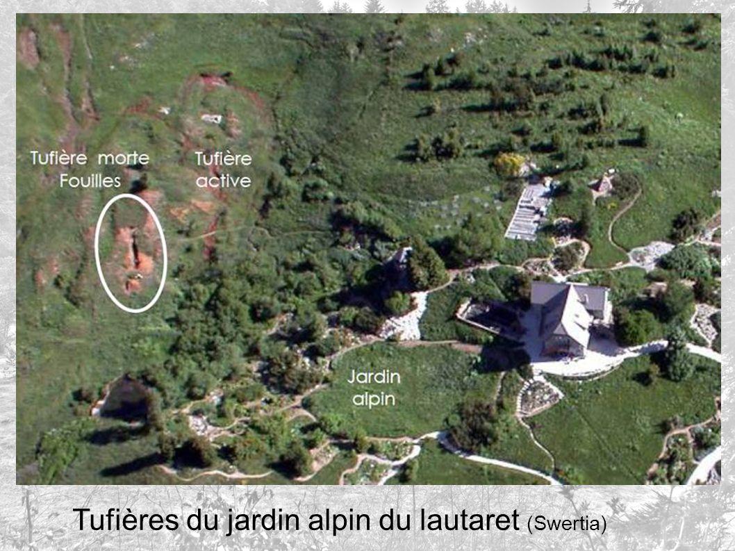 Tufières du jardin alpin du lautaret (Swertia)