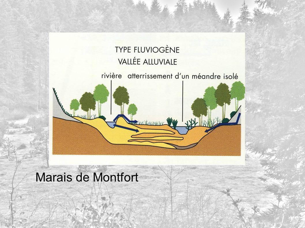 Marais de Montfort