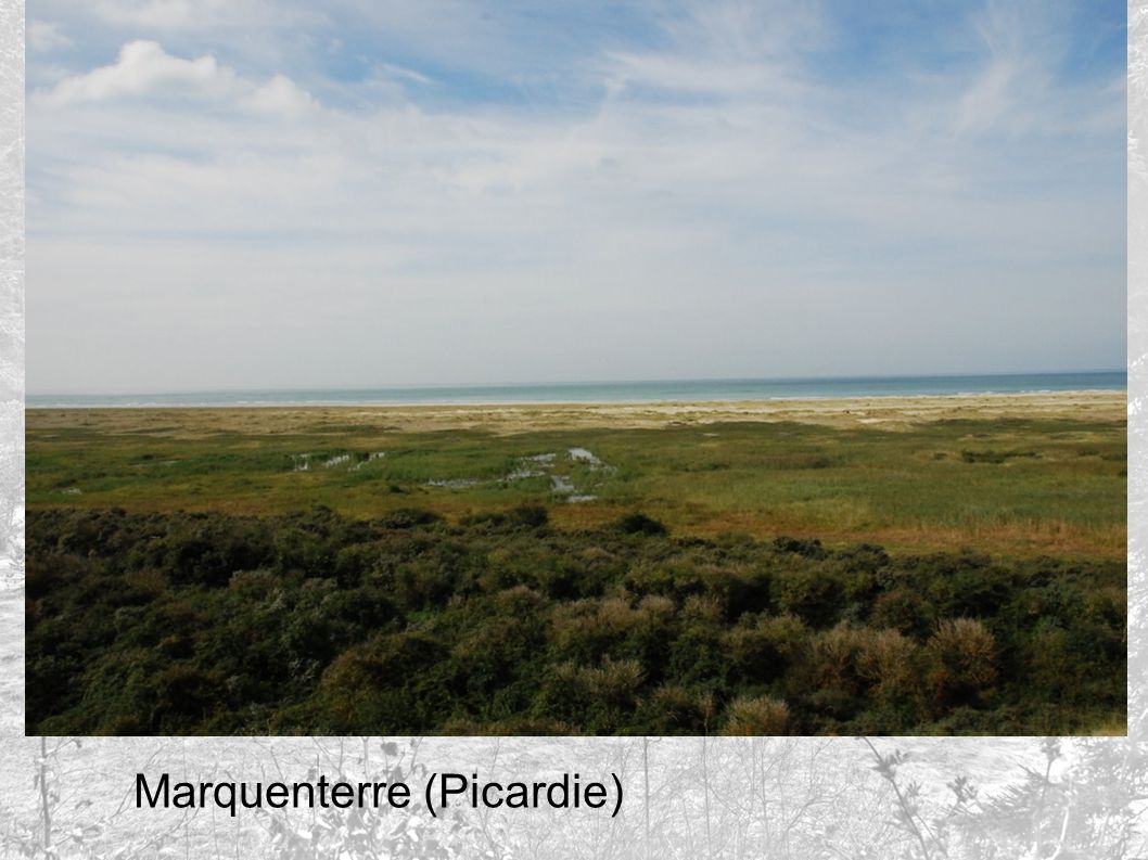 Marquenterre (Picardie)