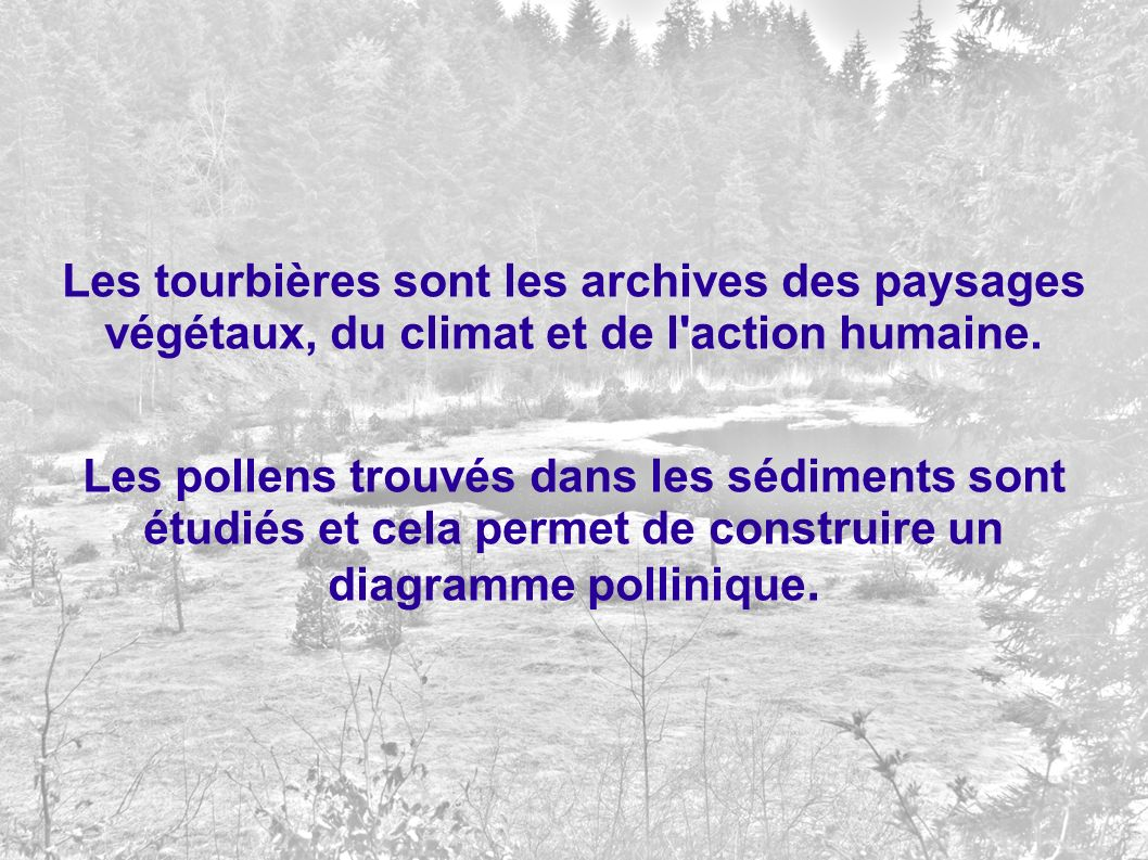 Les tourbières sont les archives des paysages végétaux, du climat et de l action humaine.