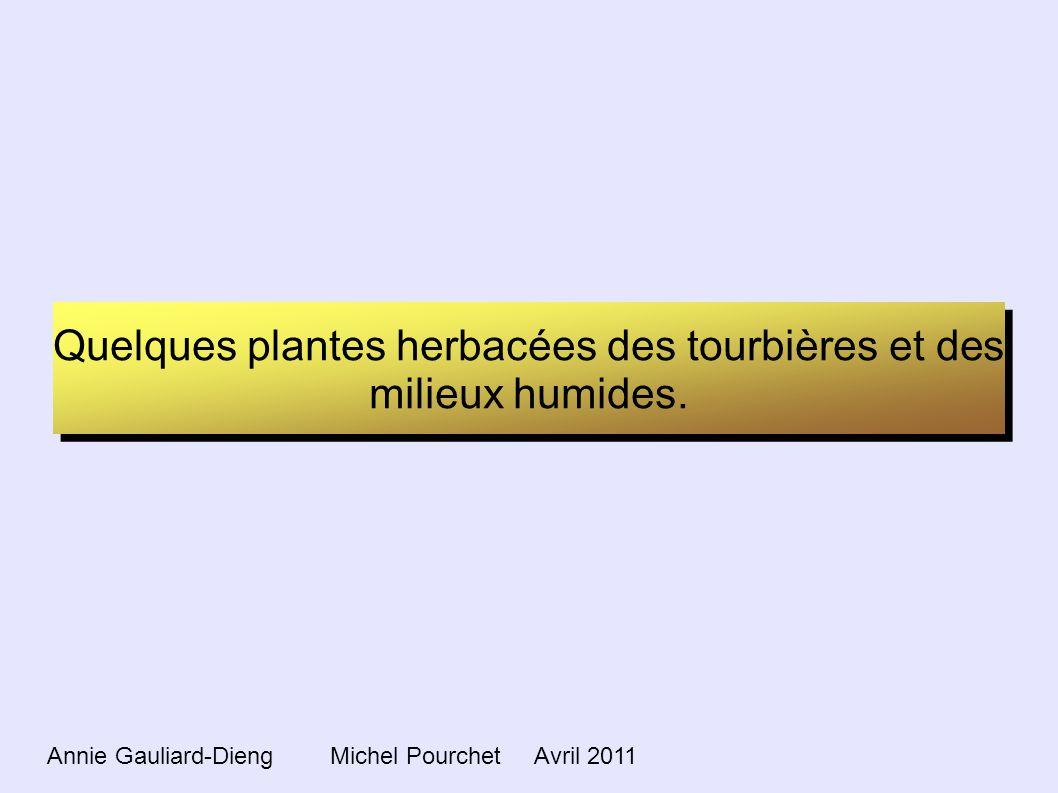 Quelques plantes herbacées des tourbières et des milieux humides.