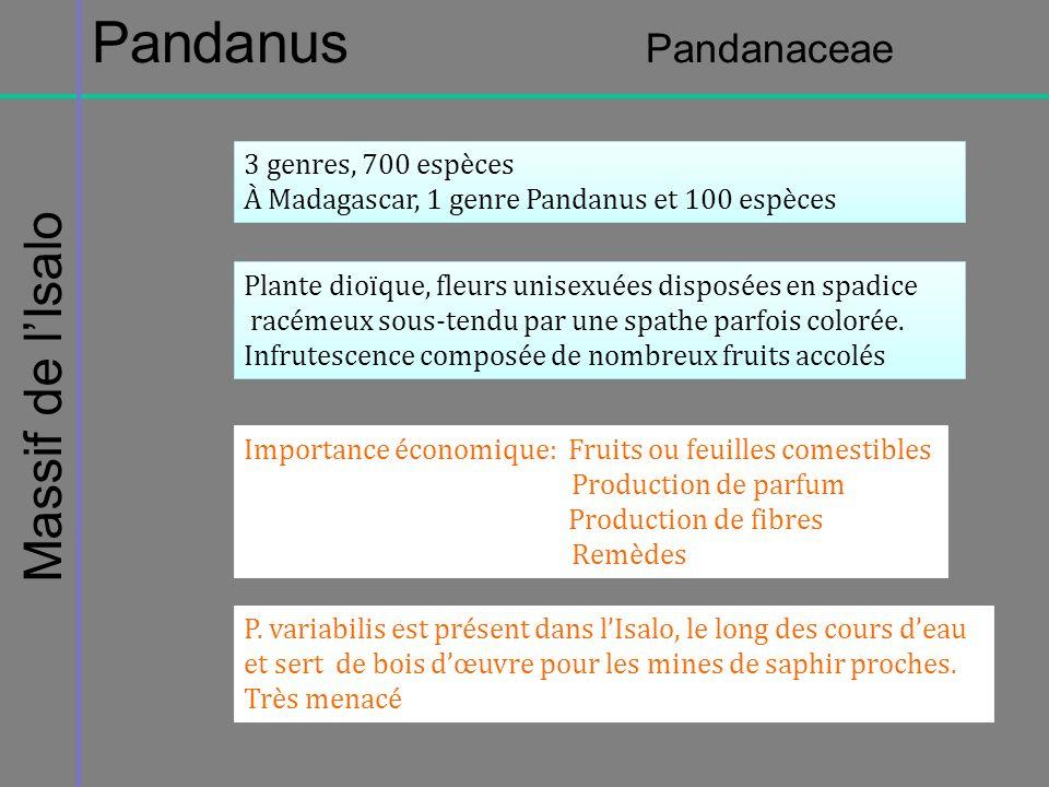 Pandanus Pandanaceae Massif de l'Isalo 3 genres, 700 espèces