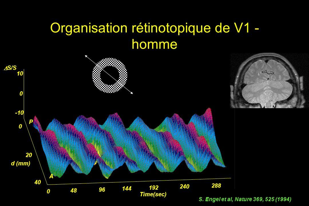 Organisation rétinotopique de V1 - homme