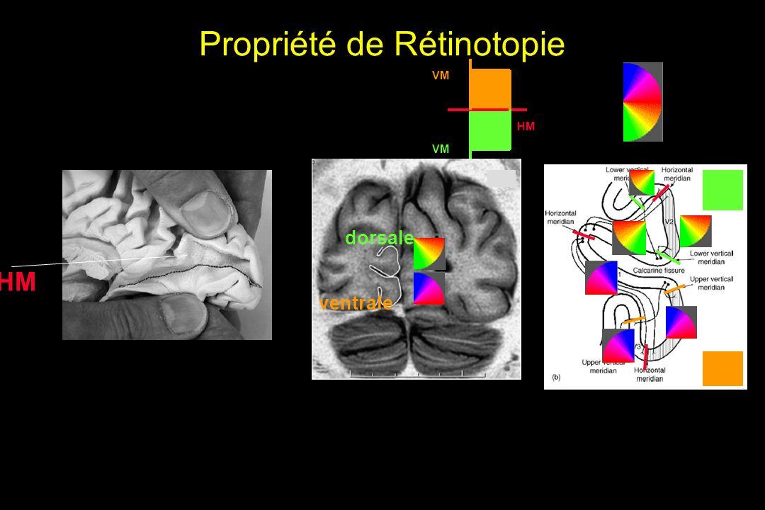 Propriété de Rétinotopie