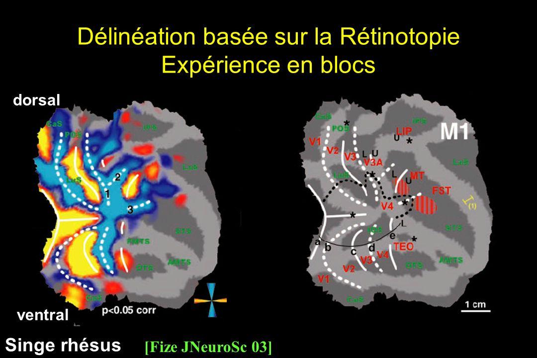 Délinéation basée sur la Rétinotopie Expérience en blocs