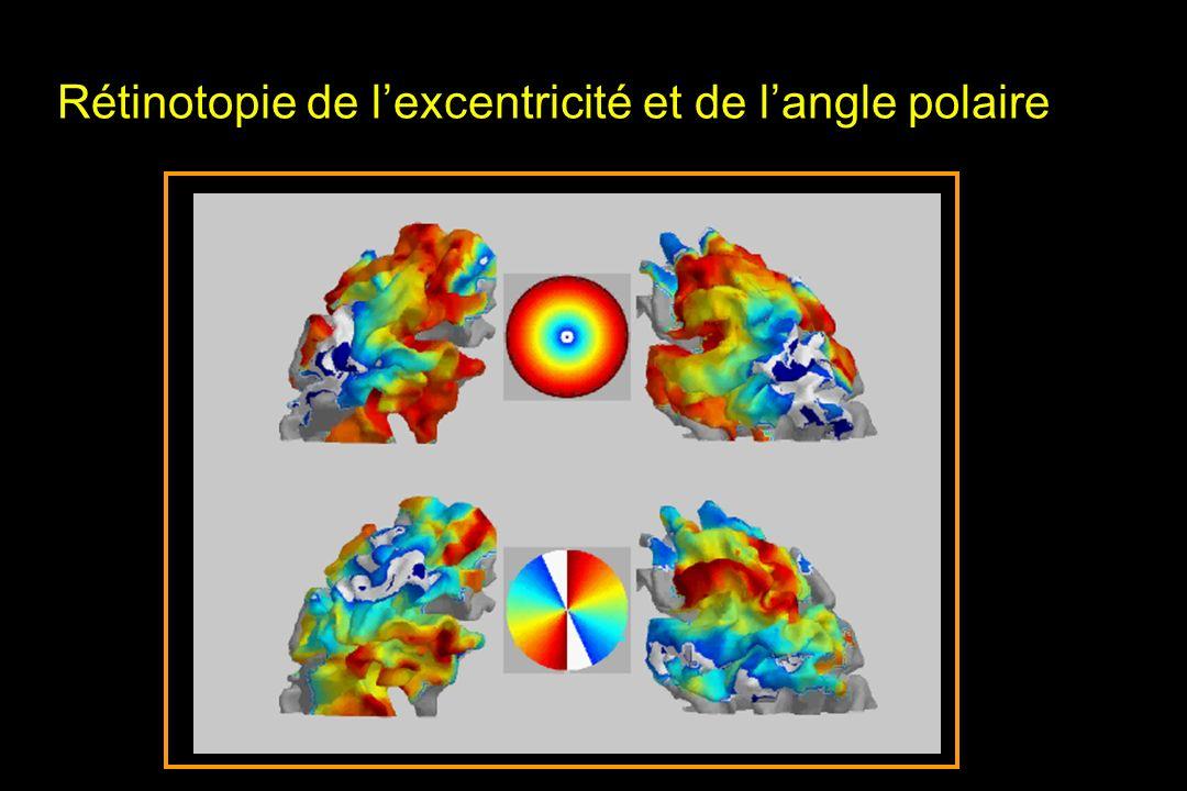Rétinotopie de l'excentricité et de l'angle polaire