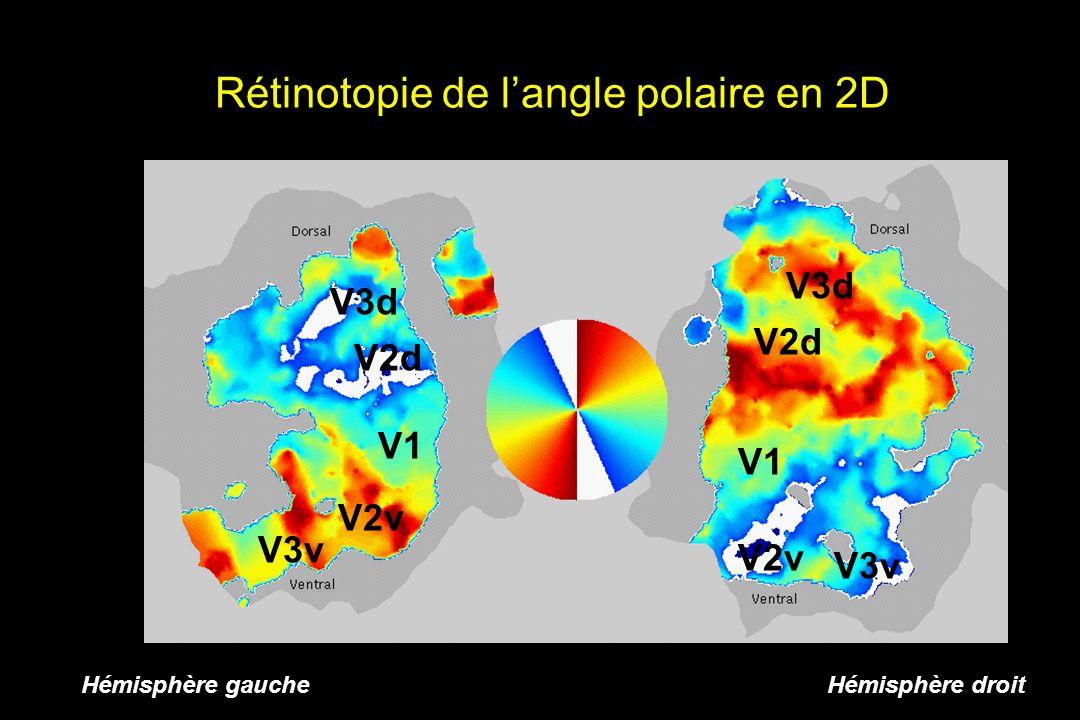 Rétinotopie de l'angle polaire en 2D