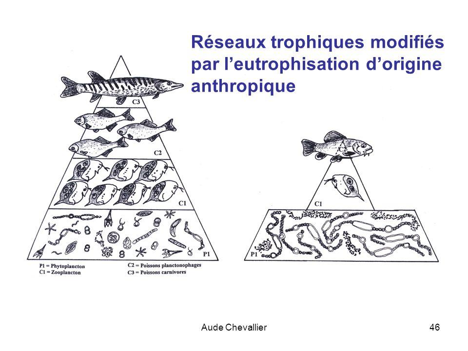 Réseaux trophiques modifiés par l'eutrophisation d'origine anthropique