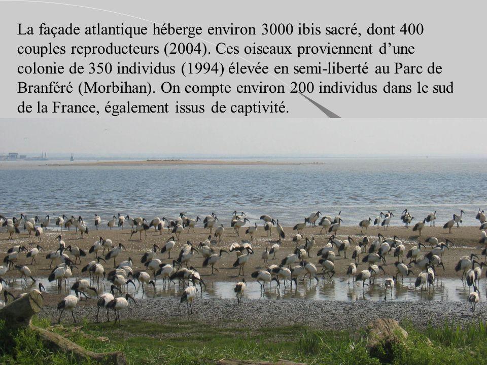La façade atlantique héberge environ 3000 ibis sacré, dont 400 couples reproducteurs (2004).