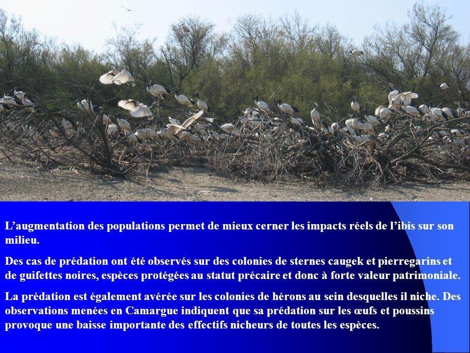 L'augmentation des populations permet de mieux cerner les impacts réels de l'ibis sur son milieu.