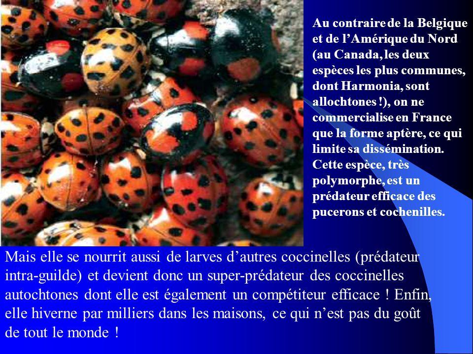 Au contraire de la Belgique et de l'Amérique du Nord (au Canada, les deux espèces les plus communes, dont Harmonia, sont allochtones !), on ne commercialise en France que la forme aptère, ce qui limite sa dissémination. Cette espèce, très polymorphe, est un prédateur efficace des pucerons et cochenilles.