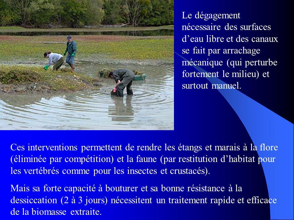 Le dégagement nécessaire des surfaces d'eau libre et des canaux se fait par arrachage mécanique (qui perturbe fortement le milieu) et surtout manuel.