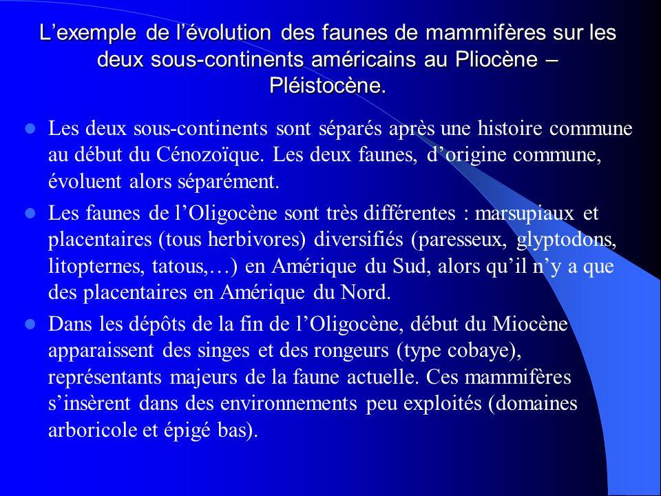 L'exemple de l'évolution des faunes de mammifères sur les deux sous-continents américains au Pliocène – Pléistocène.