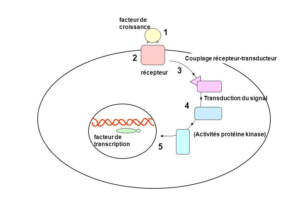 1 2 3 4 5 facteur de croissance Couplage récepteur-transducteur
