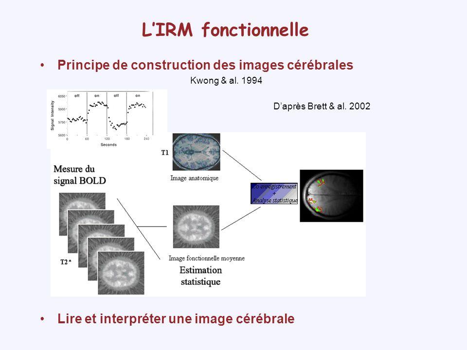 L'IRM fonctionnelle Principe de construction des images cérébrales