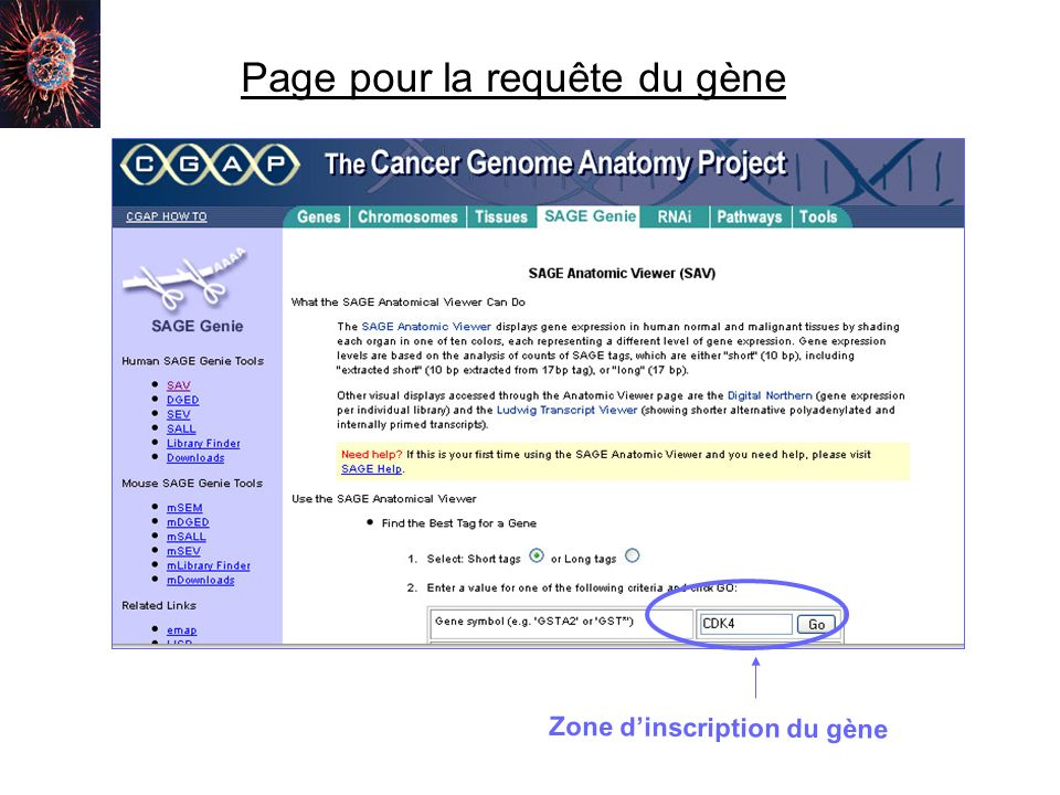 Page pour la requête du gène